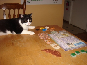 Cat on board game table